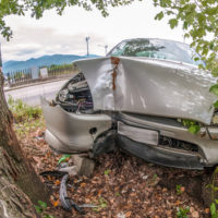 vehicle-struck-by-a-tree
